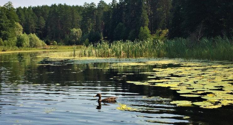 Отдых на озере Яльчик, Марий Эл